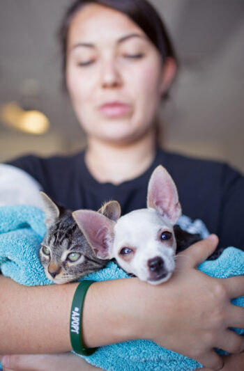 woman-cradeling-puppy-and-kitten